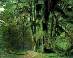Hall of Mosses, Hoh Rain Forest