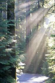 Sun Rays in the Sol Duc